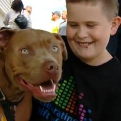 Ace pitbull heros carre