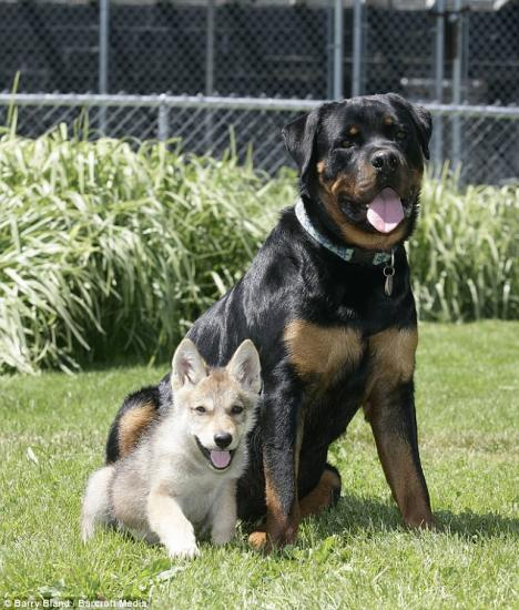 Rott and wolf